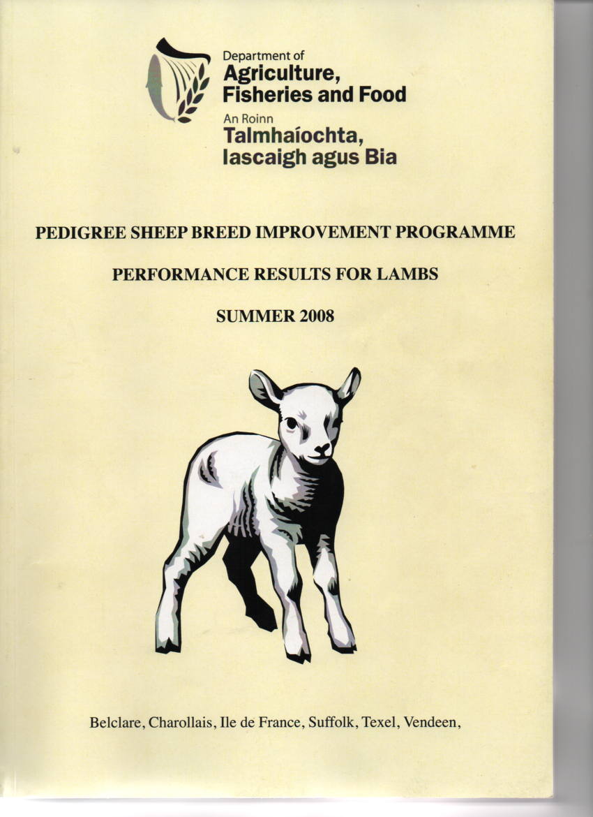 sale of ewe lambs - Irish Texel